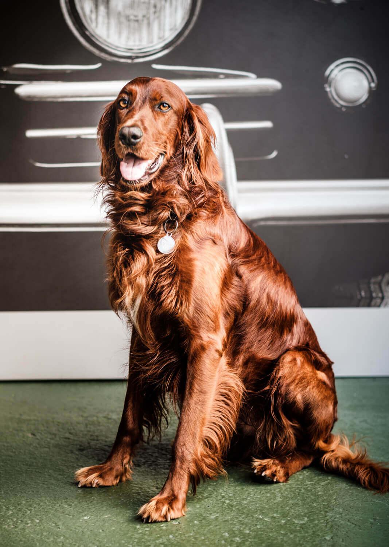 ritratto di un cane a torino